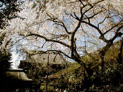 吉野水分神社(よしのみくまりじんじゃ)